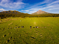 Aerial view of a cattle pasture just outside Egmont National Park,  Mt. Taranaki in the background,  North Island, New Zealand