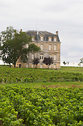 Vineyard. Chateau XXXX, Saint-Chrystoly-Medoc. Medoc, Bordeaux, France
