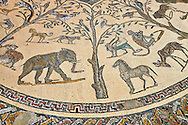 Roman mosaic from The House of Orpheus showing Orpheus playing a lute in the centre with wild African animals surrounding him. From the triclinium or the dining room of the villa. Volubilis Archaeological Site, near Meknes, Morocco .<br /> <br /> If you prefer to buy from our ALAMY PHOTO LIBRARY  Collection visit : https://www.alamy.com/portfolio/paul-williams-funkystock/roman-mosaic.html - Type -   Volubilis    - into the LOWER SEARCH WITHIN GALLERY box. Refine search by adding background colour, place, museum etc<br /> <br /> Visit our ROMAN MOSAIC PHOTO COLLECTIONS for more photos to download  as wall art prints https://funkystock.photoshelter.com/gallery-collection/Roman-Mosaics-Art-Pictures-Images/C0000LcfNel7FpLI
