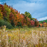 A mix of color in a meadow on a stormy afternoon. <br /> <br /> All Content is Copyright of Kathie Fife Photography. Downloading, copying and using images without permission is a violation of Copyright.