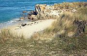 Beach rocks sea sand marram grass,  Island of Herm, Channel Islands, Great Britain