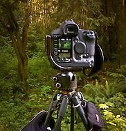 A Canon SLR camera on a tripod in the forest with and image on the viewer