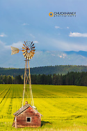 Old windmill sits above flowering field of canola in the Flathead Valley, Montana, USA