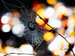 Spider web with dew drops early in the morning sun, Yach Elzach, Black Forest, Baden-Wuerttemberg, Germany