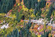 Fall foliage along Stevens Canyon road in Mount Rainier National Park, Washington State, USA