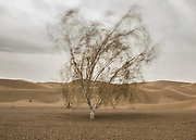A lone tree in the desert.