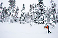 One young woman cross country skis on a trail in the snow in Bend, Oregon. (releasecode: jk_mr1033) (Model Released)
