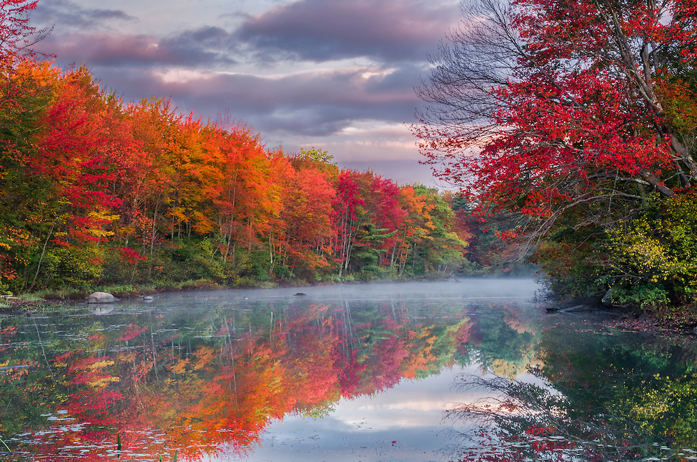 Red maples and reflections in fall, Winnipesauke River backwater, Northfield, NH