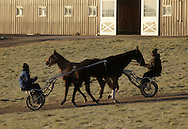 Town of Wallkill, New York - One harness racing horse and trainer head back to the barn while another horse and trainer moves down to the track on a cold morning at the Mark Ford Training Center on Dec. 12, 2011.