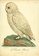 Chouette Effraie or barn owl (Tyto alba) Bird of Prey from the Book Histoire naturelle des oiseaux d'Afrique [Natural History of birds of Africa] by Le Vaillant, François, 1753-1824; Publish in Paris by Chez J.J. Fuchs, libraire .1799
