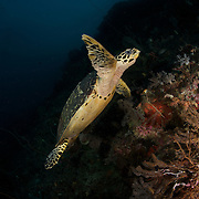 Dive Spot: 3 Sisters