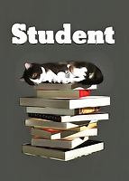 This is a fine art piece that is definitely going to appeal to anyone who has gone through college. If you know a thing or two about late nights, lugging books around, and studying well into the early hours of the morning, then you will definitely relate to everything in this piece. You are going to note that the adorable cat in this piece has likely been studying for a long time. We can see that it is fast asleep on top of a pile of books. A piece such as this can make for a welcome addition to any space. .<br />