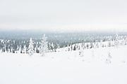Gentle Hills | Saariselkä, Finland