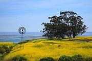 Big Sur California Landscape