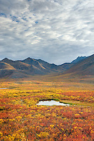 Tundra in the Ogilvie Mountains displaying vibrant autumn foliage, Tombstone Territorial Park Yukon Canada