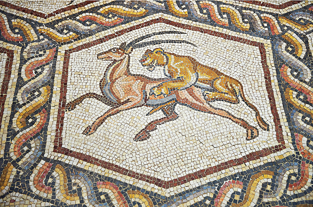 A lion hunting from the 3rd century Roman mosaic villa floor from Lod, near Tel Aviv, Israel. The Roman floor mosaic of Lod is the largest and best preserved mosaic floor from the levant region along the eastern Mediterranean coast. It is unclear whether the owners were Jewish, Christian or pagan but either way they would have been wealthy to own such a magnificent floor. The Shelby White and Leon Levy Lod Mosaic Centre, Lod, Israel. .<br /> <br /> If you prefer to buy from our ALAMY STOCK LIBRARY page at https://www.alamy.com/portfolio/paul-williams-funkystock/roman-mosaic.html . Type -    lod  - into LOWER SEARCH WITHIN GALLERY box - Refine search by adding a subject, place, background colour, museum etc.<br /> <br /> Visit our ROMAN WORLD PHOTO COLLECTIONS for more photos to download or buy as wall art prints https://funkystock.photoshelter.com/gallery-collection/The-Romans-Art-Artefacts-Antiquities-Historic-Sites-Pictures-Images/C0000r2uLJJo9_s0
