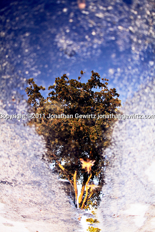 Reflection of a leafy tree on a wet street. WATERMARKS WILL NOT APPEAR ON PRINTS OR LICENSED IMAGES.
