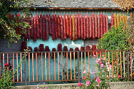 Capsicum annuum or chili peppers drying  to make Hungarian paprika - Kalocsa Hungary .<br /> <br /> Visit our HUNGARY HISTORIC PLACES PHOTO COLLECTIONS for more photos to download or buy as wall art prints https://funkystock.photoshelter.com/gallery-collection/Pictures-Images-of-Hungary-Photos-of-Hungarian-Historic-Landmark-Sites/C0000Te8AnPgxjRg