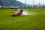 farmer is fertilizing a rice field. photographed in Japan in November