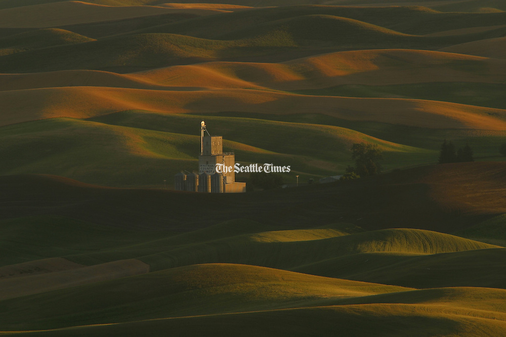 Viewing from Steptoe Butte, near Pullman, Washington, a grain elevator on the Palouse is surrounded by wheat fields. (Tome Reese / The Seattle Times)