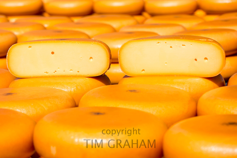 Traditional wheels of Gouda cheese on display on cobblestones at Alkmaar cheese market, The Netherlands