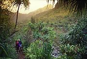 Kalalau Trail, Hanakapiai Valley, Napali Coast, Kauai, Hawaii<br />