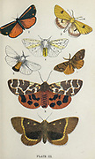 Plate III 1. Cinnabar Moth. 2. Clouded Buff. 3. Tiger Moth. 4. Large Ermine. 5. Brown-tailed Moth. 6. Vapourer. 7. Oak Eggar. from the book ' The common moths of England ' by Wood, J. G. (John George), 1827-1889 Publication date 1878 in London : by G. Routledge and Sons