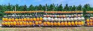 Pumpkins, Milk Pail U-Pick Farm, WaterMIll, NY
