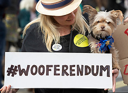 "© Licensed to London News Pictures. 07/10/2018. London, UK. Teddy is held by his owner during the 'Wooferendum' march and rally to Parliament Square to demand a ""People's Vote"" on the final Brexit agreement.  Photo credit: Peter Macdiarmid/LNP"