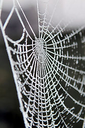 © Licensed to London News Pictures. 12/12/2012. Witney, UK. A cobweb in the heavy frost in Witney following heavy frost. Photo credit : Ric Mellis/LNP