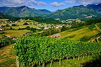 France, Pyrénées-Atlantiques (64), Pays Basque, Saint-Etienne-de-Baïgorry, vin d'Irouleguy // France, Pyrénées-Atlantiques (64), Basque Country, Saint-Etienne-de-Baïgorry, Irouleguy wine