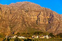 Vineyards  near Stellenbosch, Cape Winelands, near Cape Town, South Africa.