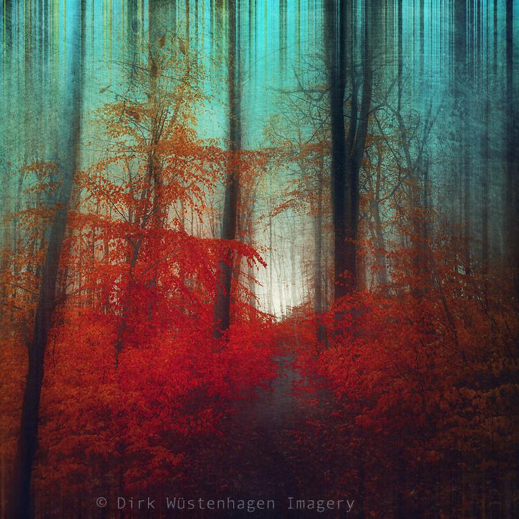 Redbubble prints: http://rdbl.co/2orrD85