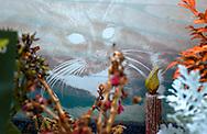 Deutschland, DEU, Berlin, 2002: Grab einer Katze auf dem Tierfriedhof. Das Berliner Tierheim ist das groesste und modernste auf der Welt. | Germany, DEU, Berlin, 2002: Grave of a cat at the animal cemetery of the world's biggest and most modern animal shelter in Berlin. |
