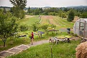 Shari Sirkin of Dancing Roots Farm in Troutdale, Oregon.