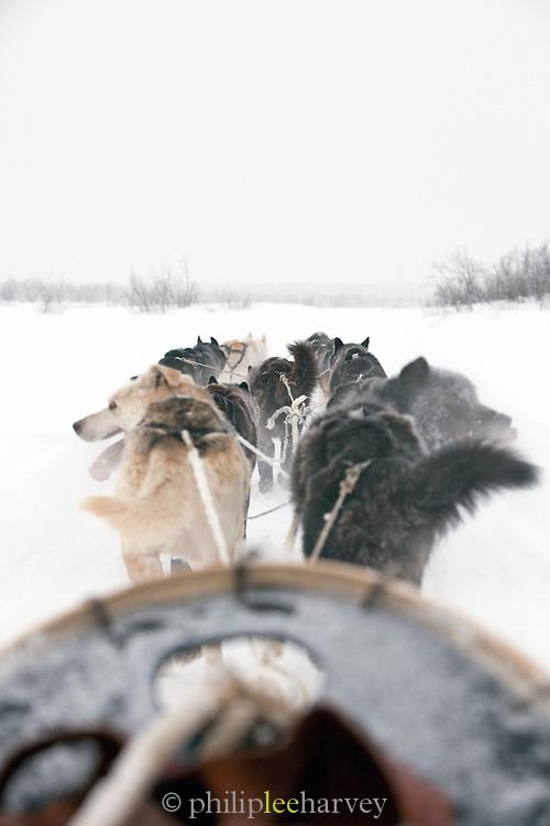 Alaskan huskies pull a sled through the countryside near Karasjok, Finnmark region, northern Norway