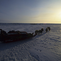 Will Steger mushes on frozen Arctic Ocean, NWT, Canada.