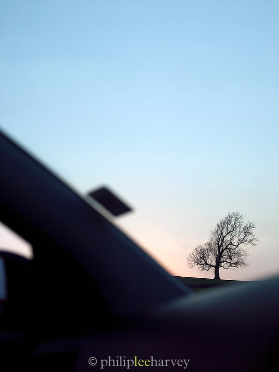 A tree with all leaves fallen at dusk in the rural countryside of the Lake District, UK