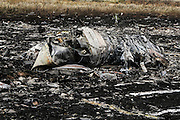 Malaysian Airlines MH17 shot down near the village of Grabavo 17th July 2014 crash site in Donetsk Separatist zone, Eastern Ukraine, Photo Bohdan Warchomij/Metaphor Images Australia