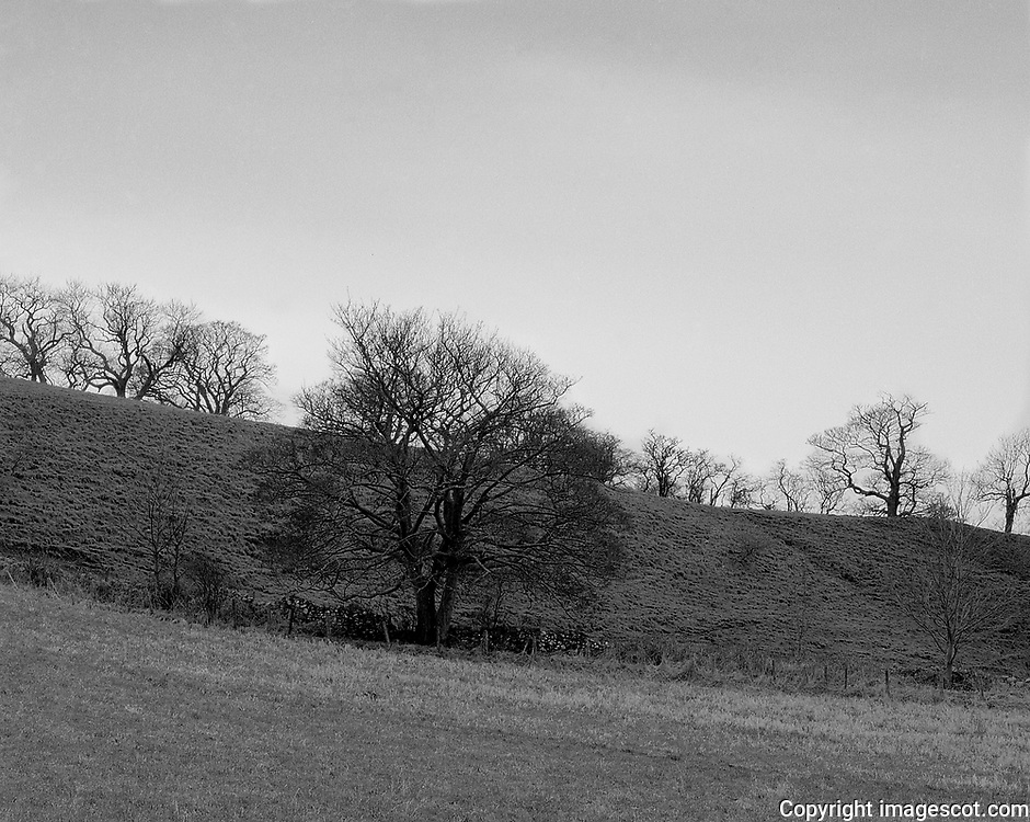 Winter trees, blackandwhite<br /> *ADD TO CART FOR LICENSING OPTIONS*