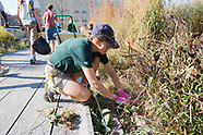 Woodland Hort Celebration on the High Line