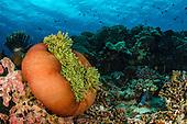 Indonesia General Underwater
