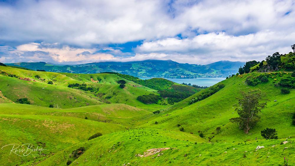 Rolling farmland on the Otago Peninsula, Dunedin, Otago, South Island, New Zealand