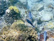 Underwater photographs in Trunk Bay, St. Johns, US Virgin Islands