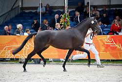 77 - Duzella<br /> KWPN Paardendagen 2011 - Ermelo 2011<br /> © Hippo Foto - Leanjo de Koster