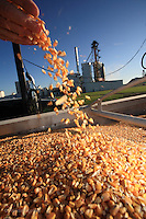 Agricultural photography by Randall Hyman