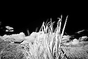 Infrared (IR) image - I like that when using a polarizing filter, the sky goes black allowing for very high contrast imagery.  In this scene, I like that there is a bit of motion blur in the tips of the moving grass.