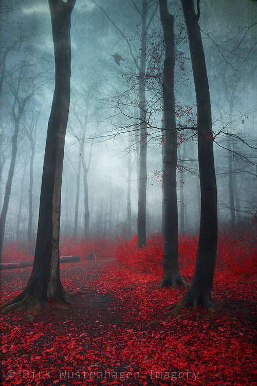 Misty forest on a December morning - photograph edited with texture overlays