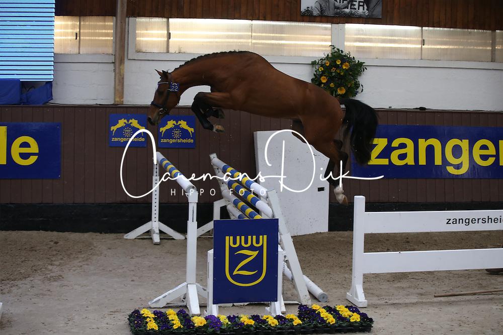 022, Eccles E Z<br /> Voorjaarshengstenkeuring Zangersheide 2016<br /> © Hippo Foto - Counet Julien