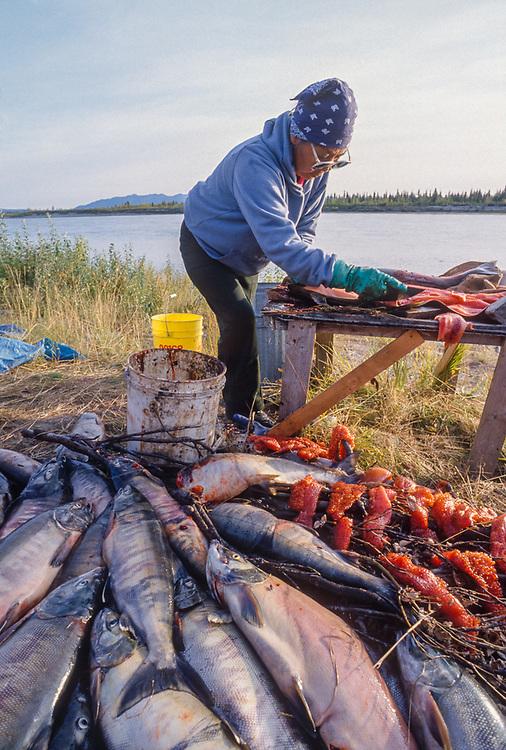 Mary Foster fillets salmon, Kobuk River fish camp, Kobuk Valley National Park, Alaska, USA